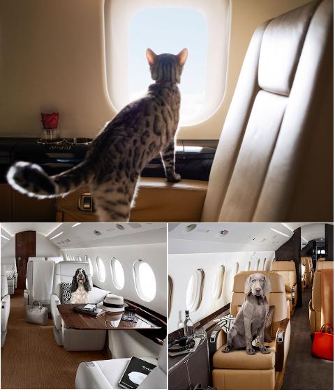 перелет на бизнес джете вместе с домашним животным